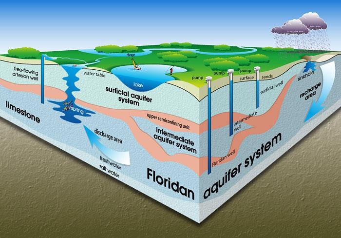 The Florida Aquifer System